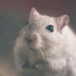 hamster萌