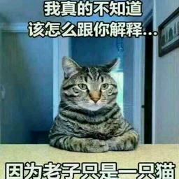 妖猫_8843